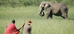 Naboisho Camp - Elephant