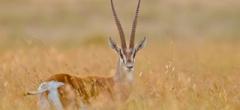 Sosian - Photographic safaris