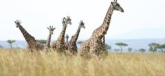 Itinerary photo - masai mara