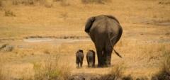 Client photo - baby elephants