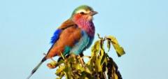 Client photo - Birding