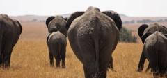 Client photo - elephant herd