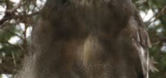 Client photo - monkey