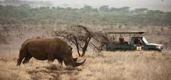 Lewa Safari Camp - rhino
