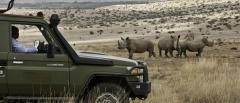 Lewa Downs - rhino