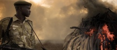 Blog photo - Ivory Trade