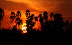 Safari Landscape - Sunset