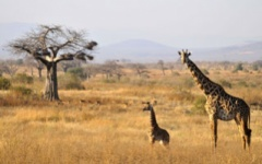 Itineary photo - safari